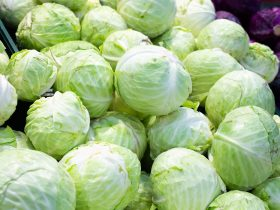 how long does cabbage last