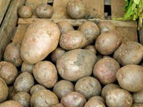 can you eat undercooked potatoes