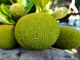 can you freeze jackfruit