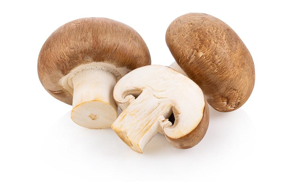 do mushrooms expire