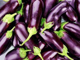 how long does eggplant last