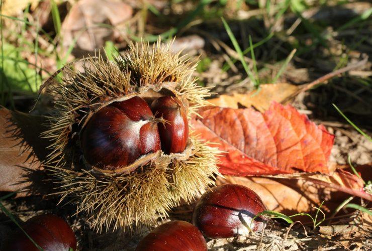 what do chestnuts taste like